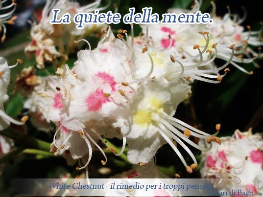 White Chestnut, fiore di Bach per i pensieri negativi ricorrenti