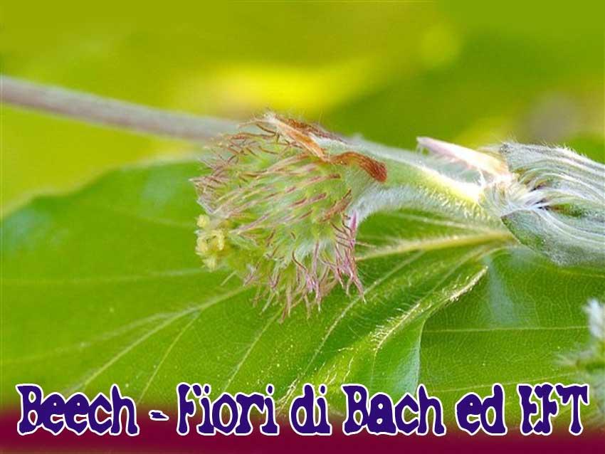 beech-fiori-di-Bach-eft