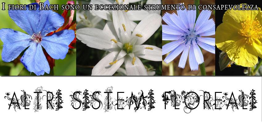 altri sistemi floreali