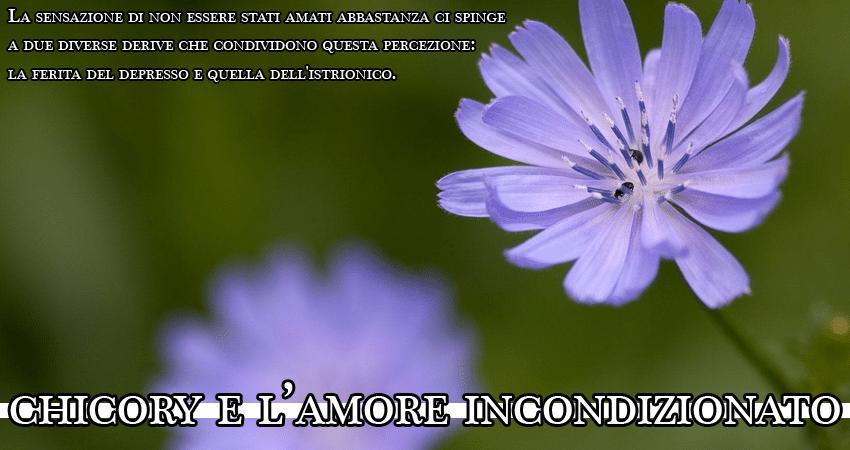 chicory fiori di bach significato