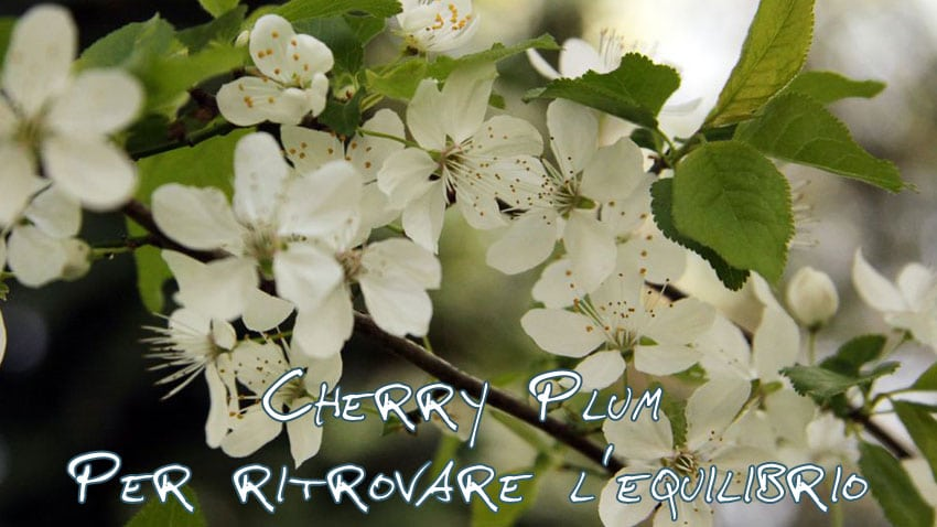 fiori di bach cherry plum a cosa serve