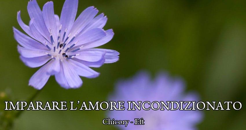 CHICORY fiori di bach ed EFT: IMPARARE L'AMORE INCONDIZIONATO