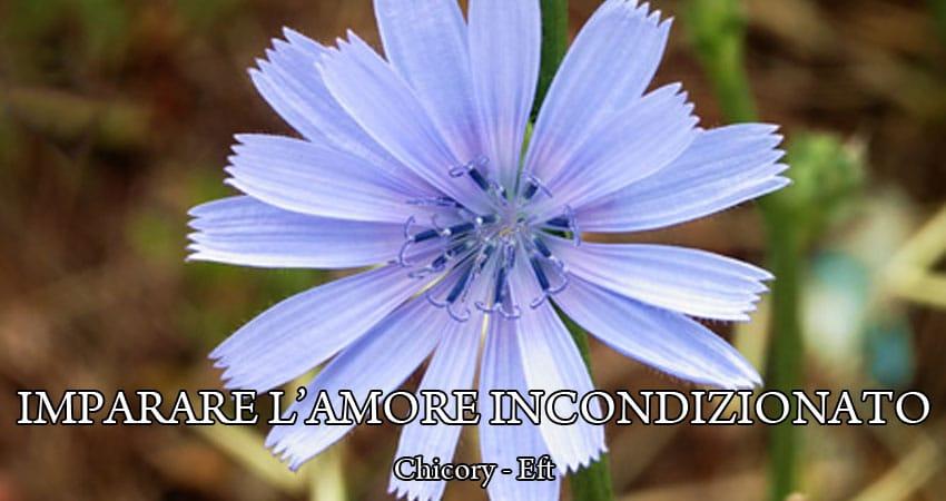 Chicory fiori di Bach
