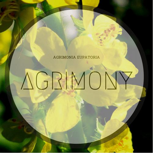 Agrimony fiori di Bach ifioridibach.com maxvolpi