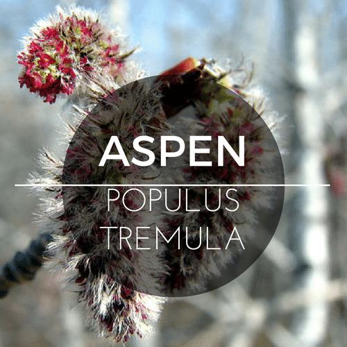 fiori di Bach Aspen