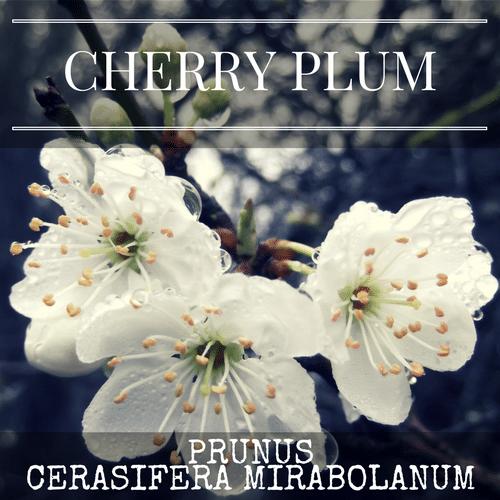 fiori di Bach Cherry Plum