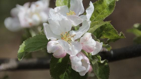 preparazione-fiori-di-bach-09