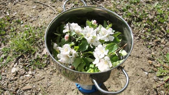 preparazione-fiori-di-bach-10
