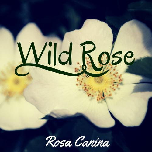 fiori di Bach Wild Rose