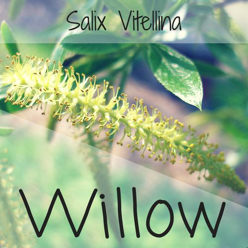 fiori di Bach Willow