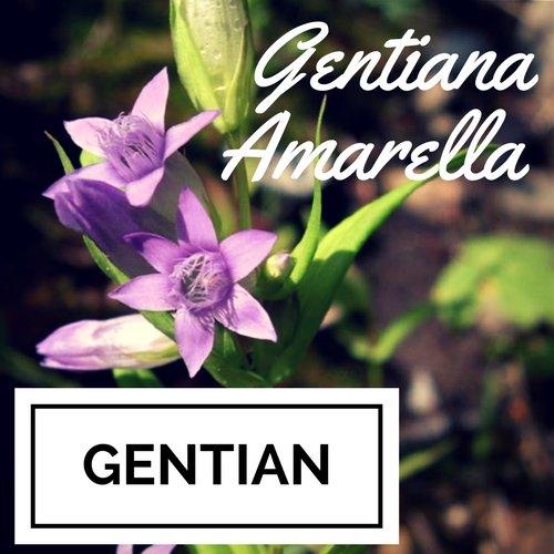 fiori di Bach Gentian