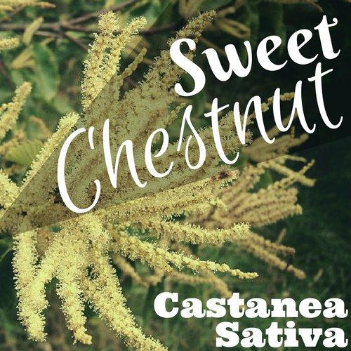 fiori di Bach Sweet Chestnut