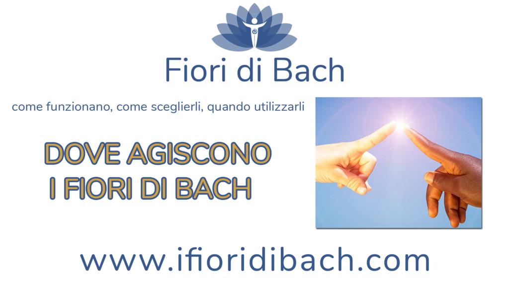 Dove agiscono i fiori di Bach?