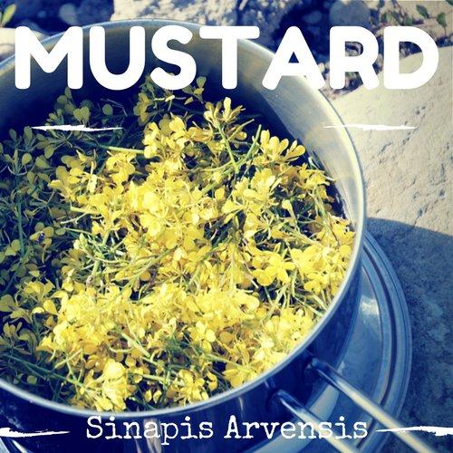 fiori di Bach Mustard