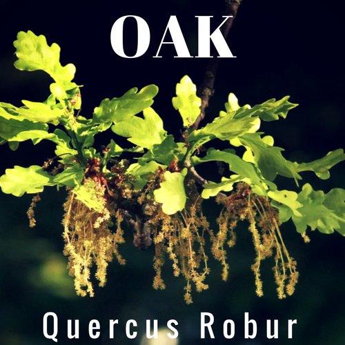 fiori di Bach Oak
