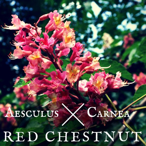 fiori di Bach Red Chestnut