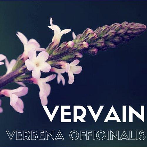 fiori di Bach Vervain