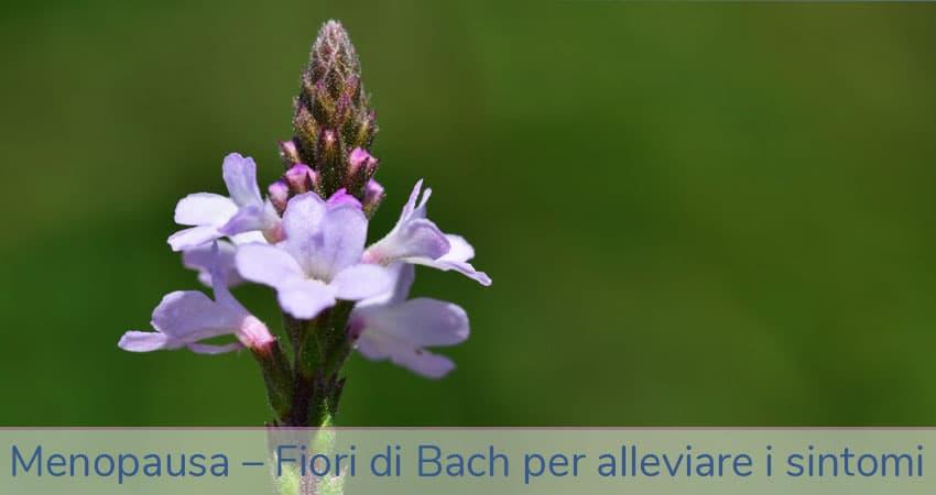 menopausa fiori di Bach per alleviare i sintomi