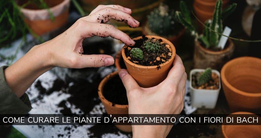 Come curare le piante d'appartamento con i fiori di Bach