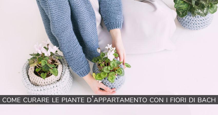 Fiori di bach per le piante d'appartamento