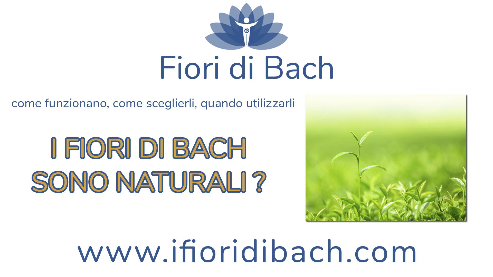 Fiori di Bach per l'ansia. Come si assumono? I fiori di Bach sono naturali?